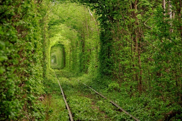 So-called Tunnel of Love in Kleven, Ukraine. [photo: Oleg Gordienko]