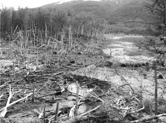 This used to be forest, now it's bog and dead snags, thanks to beavers. [JonsAdventure]