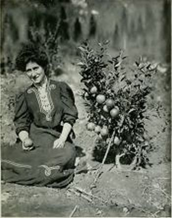 """Cox's Orange Pippin, Two Years Old"" from Bealby's Fruit Ranching in British Columbia"